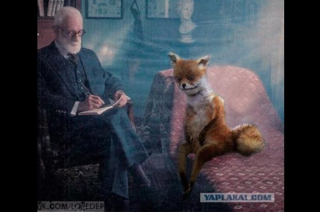 Na kozetce - życie wypchanego lisa nie jest łatwe /Internet