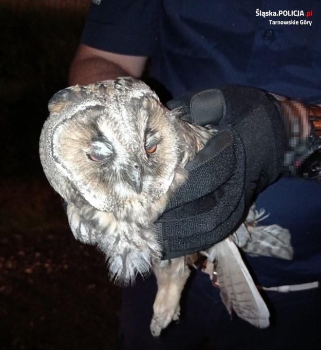 Na miejsce wezwano weterynarza, który opatrzył rannego ptaka i przewiózł go do lecznicy /Śląska policja /
