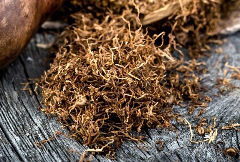 Na mole pomoże suszony tytoń /123RF/PICSEL