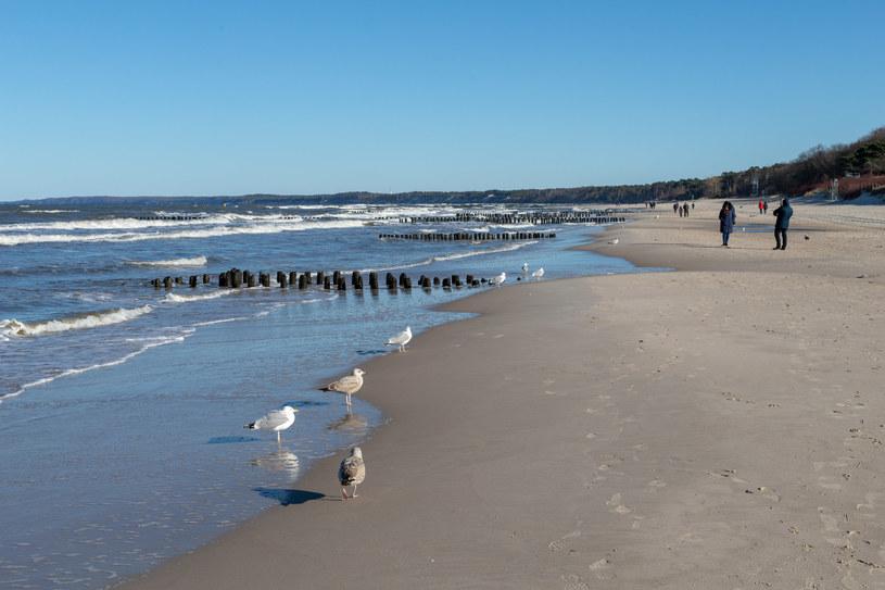 Na plaży w Ustce pojawili się niespodziewani goście /123RF/PICSEL