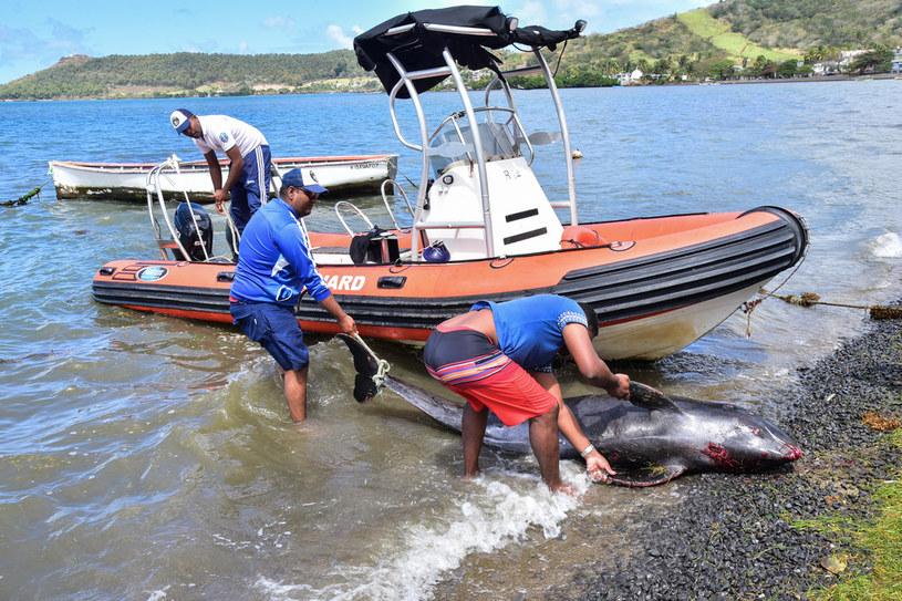 Na plaży znaleziono co najmniej 13 martwych delfinów /BEEKASH ROOPUN / L'EXPRESS MAURICE /AFP