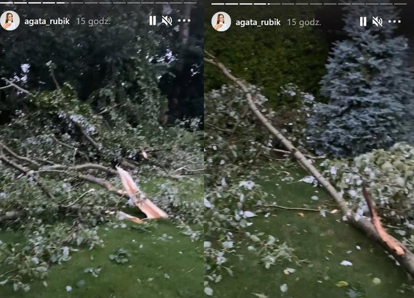 Na posesji Rubików zawaliły się dwa drzewa /Screen z https://www.instagram.com/agata_rubik /Instagram