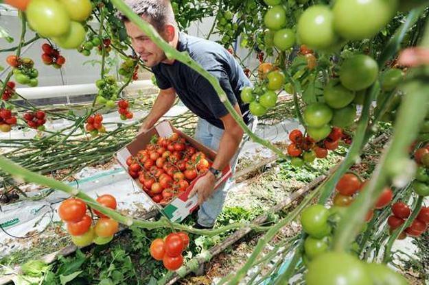 Na pracę sezonową za granicą decyduje się rokrocznie ok. pół miliona Polaków /AFP