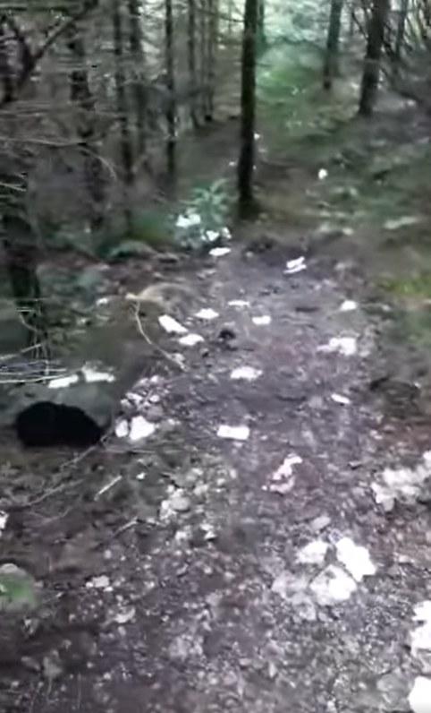 Na profilu opublikowano przykre nagranie z Doliny Jaworzynki /Facebook / Aktualne warunki w górach /Facebook