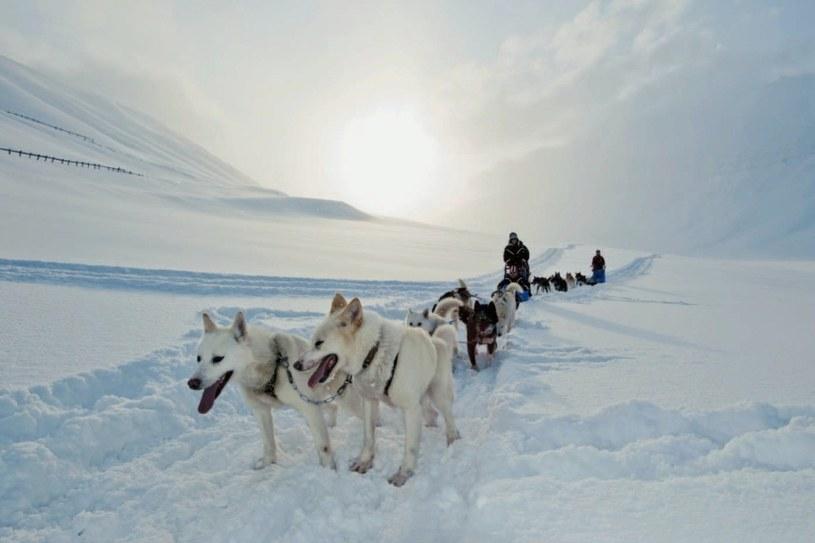Na rajd psich zaprzęgów można się wybrać za dnia lub nocą. Przewodnicy psów pozwalają turystom kierować saniami na łatwiejszych odcinkach trasy. /Twój Styl