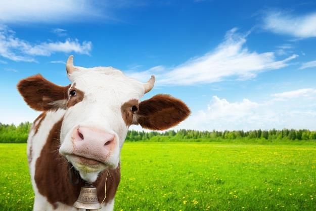 Na rynku mleka decyduje podaż /©123RF/PICSEL