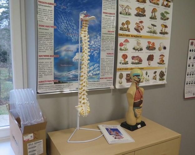 Na ścianach zawisły plakaty edukacyjne. Na szafkach stanął szkielet człowieka i model kręgosłupa /Maciej Pałahicki /RMF FM