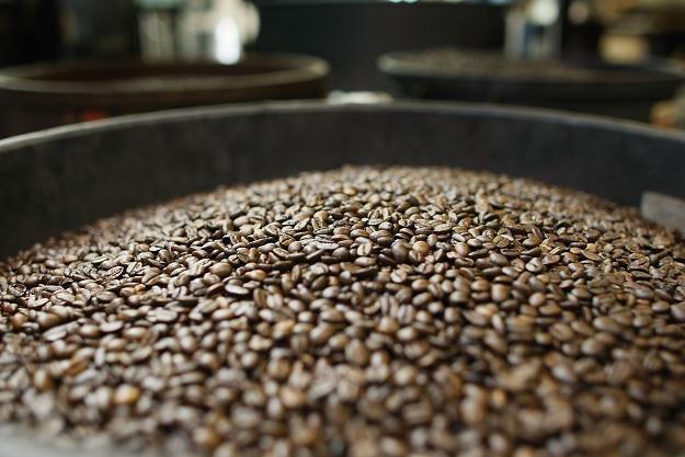 Na świecie jest ponad 40 gatunków kawy, a handluje się głównie odmianą arabica i robusta /AFP