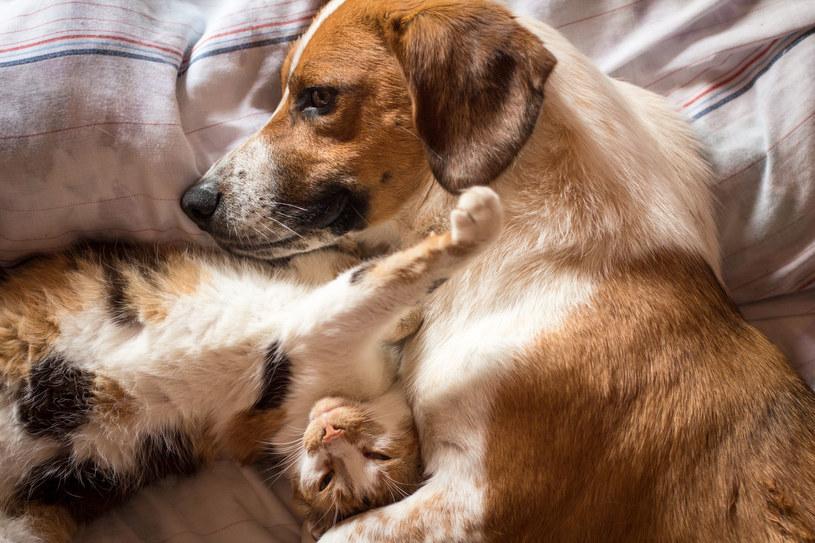 Na szczęście, ryzyko zarażenia się chorobami przenoszonymi przez psy i koty można znacząco ograniczyć /123RF/PICSEL