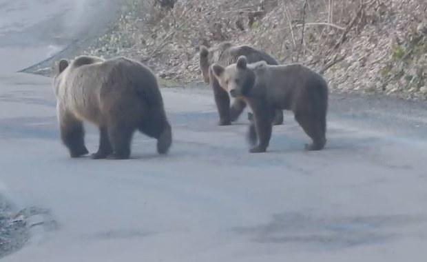 Na szlakach pustki. W Bieszczadach grasują za to niedźwiedzie