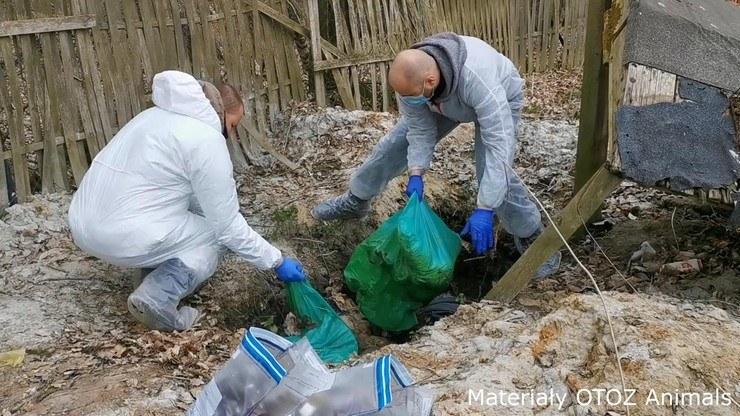 Na terenie pseudohodowli psów w Starej Hucie odnaleziono prawie 250 padłych zwierząt /