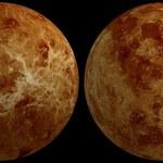 Na Wenus jednak nie ma życia?