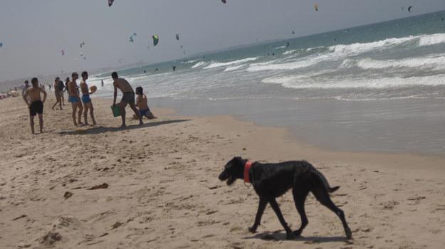 Na wielu plażach pojawiły się specjalne sektory dla psów /AFP