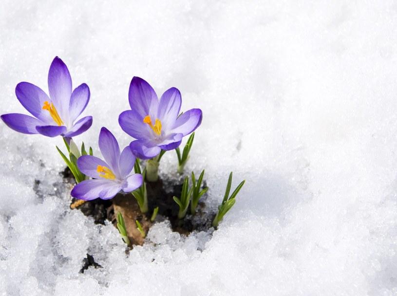 Na wiosnę musimy jeszcze poczekać /123RF/PICSEL