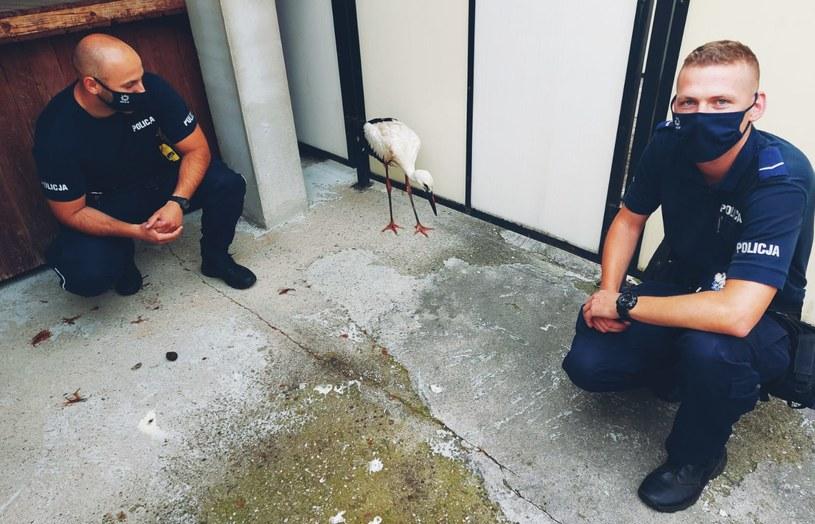 Na zdj. policjanci, którzy pomogli rannemu bocianowi /Komenda Powiatowa Policji w Szczytnie /Policja