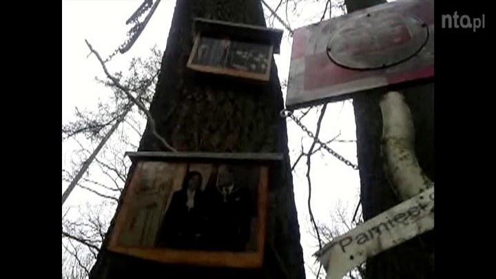 Na zdjęciach przybitych do drzewa są m. in. prezydent Lech Kaczyński z żoną Marią /TVN24/x-news /TVN24/x-news