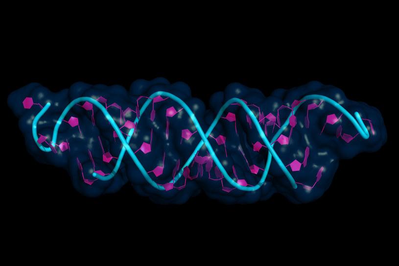 Na zdjęciu siRNA związany z mRNA /123RF/PICSEL