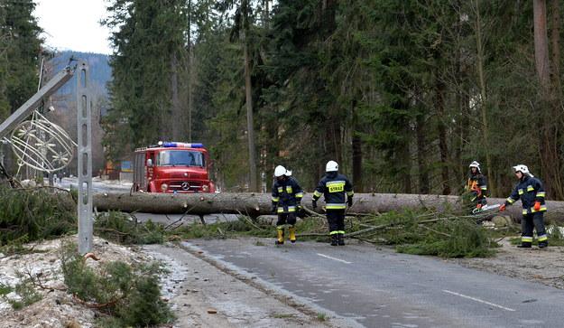 Na zdjęciu strażacy pracujący przy usuwaniu drzew powalonych przez wiatr w Zakopanem /Grzegorz Momot /PAP