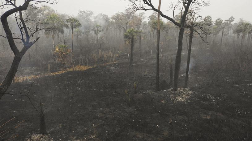 Na zdjęciu: Wypalone lasy Amazonii /PABLO COZZAGLIO /AFP