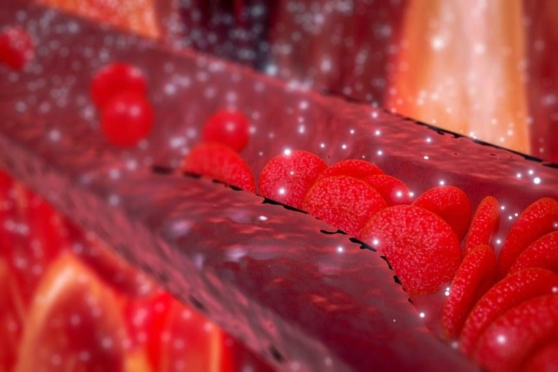 Naczynia krwionośne /123RF/PICSEL
