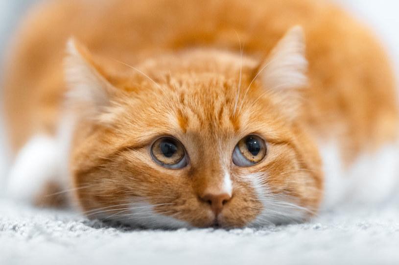 Nadwaga u kota może być niebezpiecznym schorzeniem /123RF/PICSEL