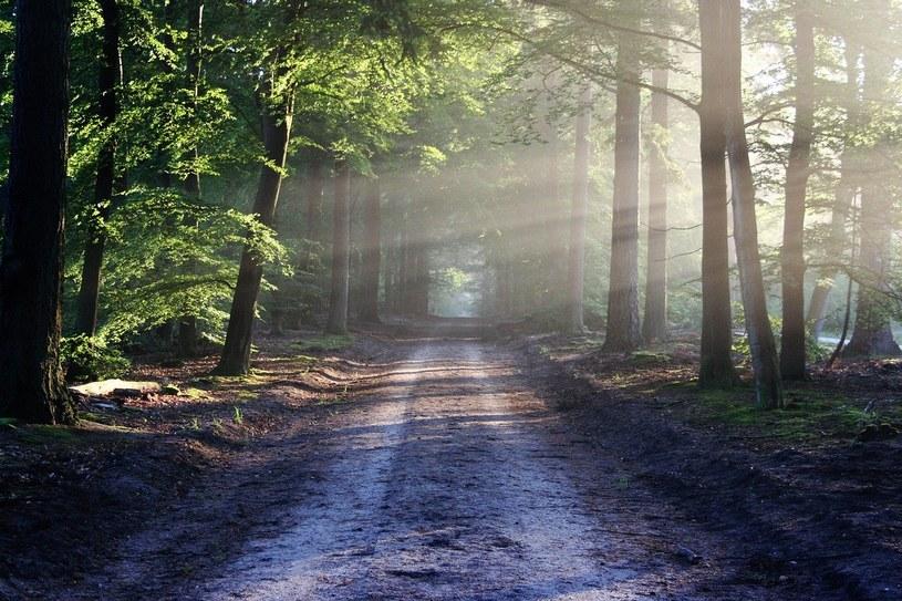 Nagi mężczyzna wystraszył kobiety w lesie! /Pixabay.com