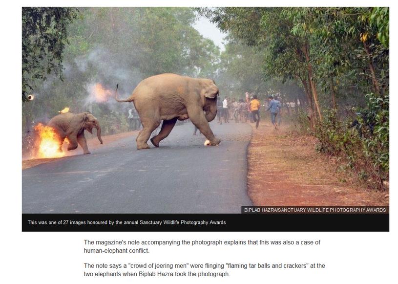 Nagrodzona fotografia /BBC /