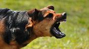 Najbardziej irytujące zachowania psiarzy