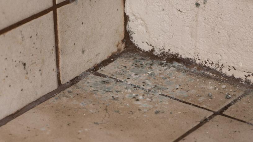 Najbardziej narażone na zagrzybienie są miejsca przy brodziku oraz umywalce. Specjaliści często radzą więc, by stosować tam fugę epoksydową, która jest odporniejsza na działanie wody /123RF/PICSEL