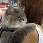 Najbardziej puszysty kot na świecie? Wszyscy chcą robić sobie z nim zdjęcia!