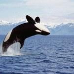 Najbardziej tajemnicze zwierzęta świata