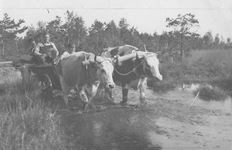 Najbiedniejszym regionem II Rzeczpospolitej było rolnicze Polesie /Narodowe Archiwum Cyfrowe /domena publiczna
