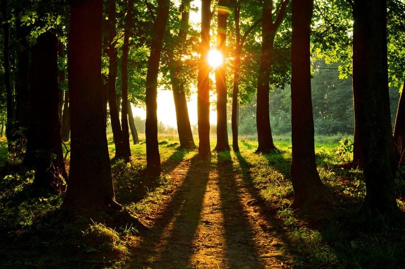 Najbliższe dni mają być ciepłe i słoneczne /123RF/PICSEL