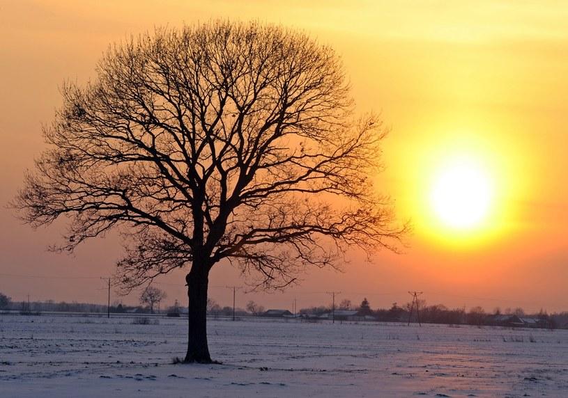 Najbliższe dni mają przynieść sporo słońca /Jan Bielecki /East News