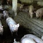 Najbliższy tydzień w gospodarce: interwencja na rynkach rolniczych oraz audyt w Kompanii Węglowej