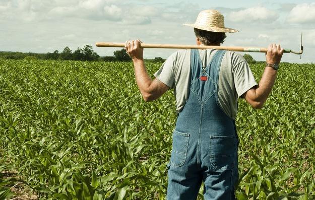 Najczęściej bezprawnymi użytkownikami nieruchomości rolnych są byli dzierżawcy /©123RF/PICSEL