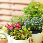 Najczęstsze błędy, które popełniamy w pielęgnacji roślin