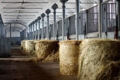 Najdłuższa w Europie stajnia ogierów