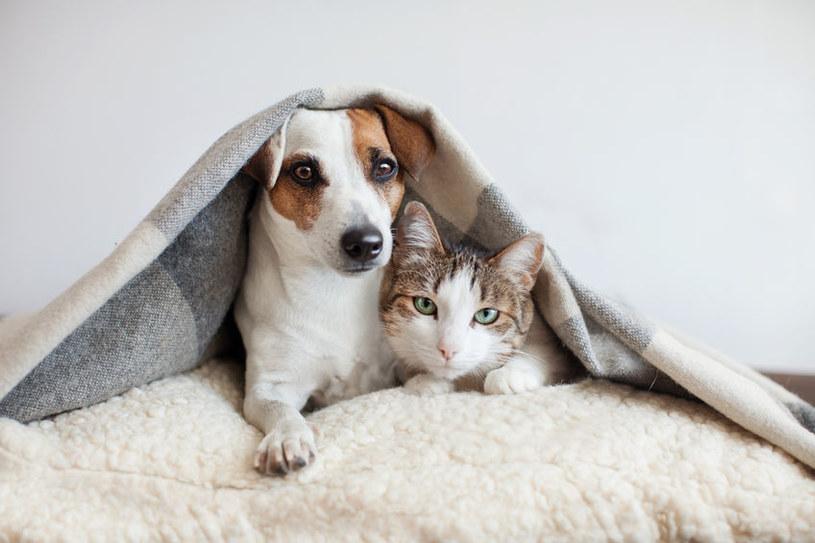 Najlepiej jest mieć kota i psa! /123RF/PICSEL