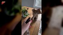 Najlepszą obroną jest atak! Wiedzą o tym i koty