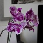 Najlepsze kwiaty do salonu i sypialni