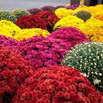 Najlepsze kwiaty do wiązanek na cmentarz