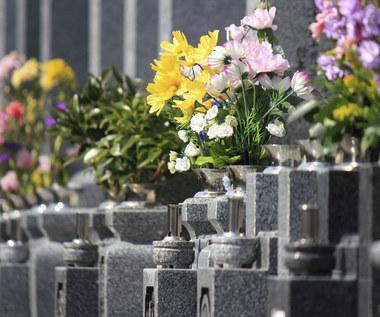 Najlepsze kwiaty na cmentarz