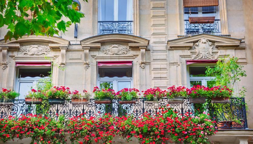 Najlepsze kwiaty na słoneczny balkon