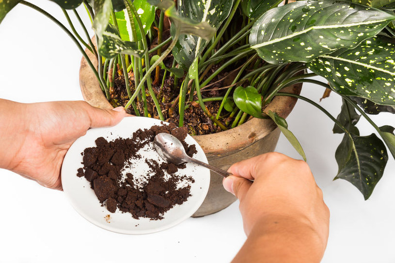Najlepsze naturalne nawozy do roślin /©123RF/PICSEL