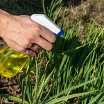 Najlepsze naturalne substancje do pielęgnowania ogrodu