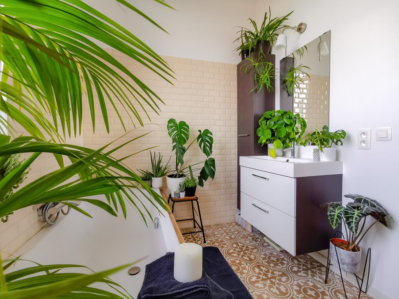 Najlepsze rośliny do łazienki /123RF/PICSEL