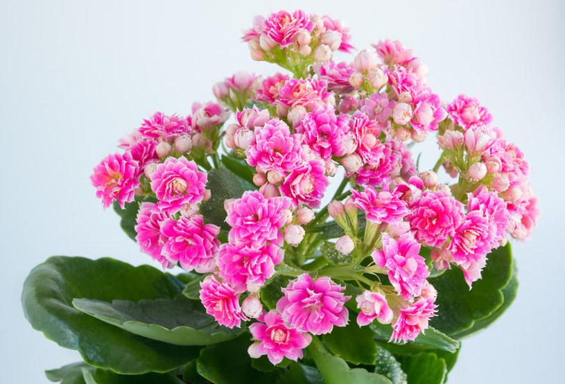 Najlepsze rośliny do sypialni /©123RF/PICSEL