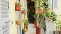Najlepsze rośliny na balkon na każdą porę roku