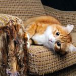 Najlepsze sposoby na odstraszenie kota